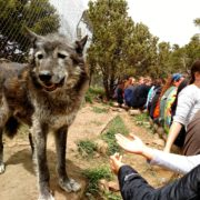 STRIVE Prep-Sunnyside goes howling with wolves